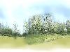 樹景01.bmp