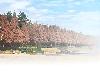 樹景02.bmp