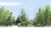 樹景06.bmp